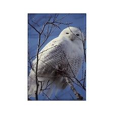 Snowy White Owl Rectangle Magnet
