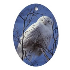 Snowy White Owl Oval Ornament