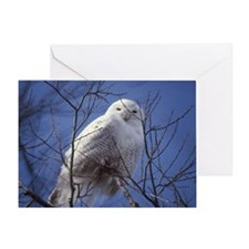 Snowy White Owl Greeting Card