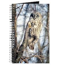Great Gray Owl Journal