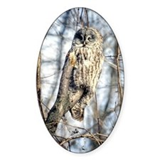 Great Gray Owl Decal
