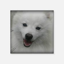 "Eskie Face Square Sticker 3"" x 3"""