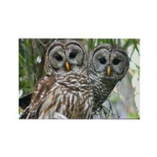 Barred Owl Pair Rectangle Magnet