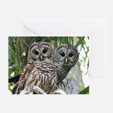 Barred Owl Pair Greeting Card