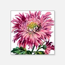 "Pink Chrysanthemum Square Sticker 3"" x 3"""