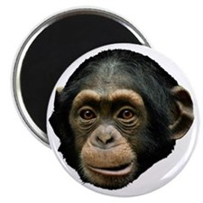 Chimpanzee Magnet