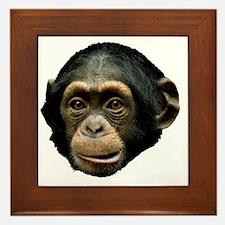 Chimpanzee Framed Tile