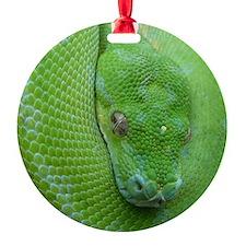 iPhone 5 case-Tree python Ornament