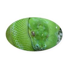 iPhone 5 case-Tree python Oval Car Magnet