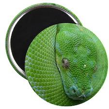 iPhone 5 case-Tree python Magnet