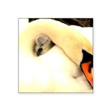 """Mother Swan and Baby Square Sticker 3"""" x 3"""""""