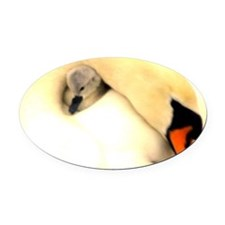 Mother Swan and Baby Oval Car Magnet