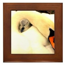 Mother Swan and Baby Framed Tile