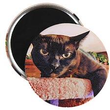 Burmese Cat/Wood Cut Style Magnet