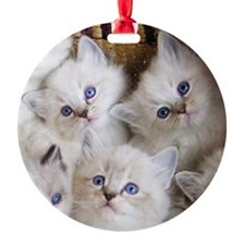 Cup o Kittens round Ornament