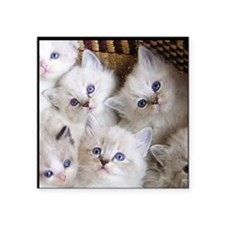 "Cup o Kittens round Square Sticker 3"" x 3"""