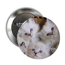 "Cup o Kittens round 2.25"" Button"