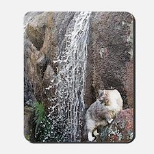 Cat in a Waterfall C Mousepad