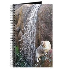 Cat in a Waterfall C2 Journal