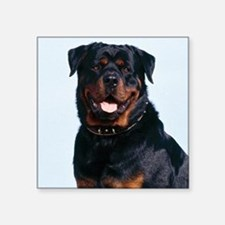 "Rottweiler Square Sticker 3"" x 3"""
