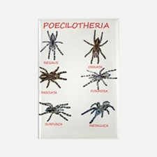 poecilotheria Rectangle Magnet