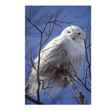 Snowy Owl - White Bird ag Postcards (Package of 8)