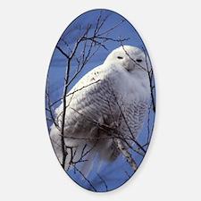 Snowy Owl - White Bird against a Sa Sticker (Oval)