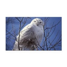 Snowy White Owl Rectangle Car Magnet