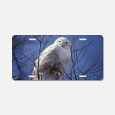 Snowy White Owl Aluminum License Plate