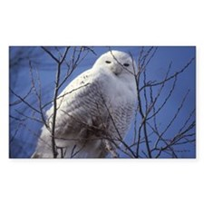 Snowy White Owl Decal