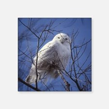 "Snowy White Owl Square Sticker 3"" x 3"""