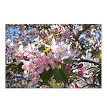 Flowering Cherry Tree Postcards (Package of 8)