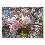 Flowering Cherry Tree Small Poster