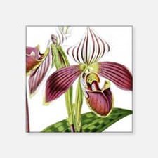 "Lady Slipper Orchid Square Sticker 3"" x 3"""
