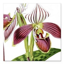 "Lady Slipper Orchid Square Car Magnet 3"" x 3"""