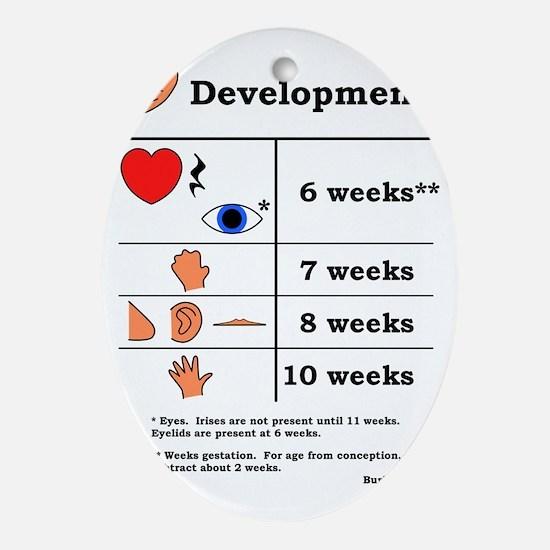 Fetal Development table (black print Oval Ornament