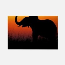 Elephant at Sunset Rectangle Magnet