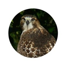 "Red-tailed Hawk 3.5"" Button"