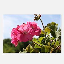 Pink Geranium in Virginia Postcards (Package of 8)
