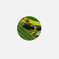 Red Eyed Tree Frog Mini Button