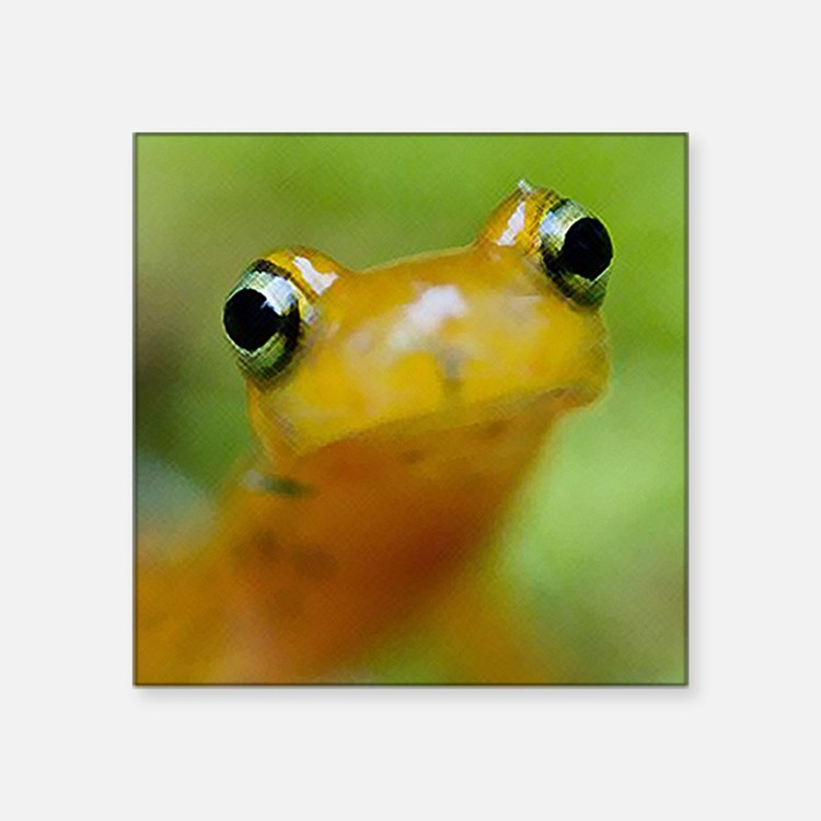 "Salamander Square Sticker 3"" x 3"""