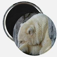 Central Park Zoo Polar Bear Magnet