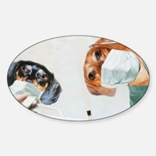 Doxies Dentists Sticker (Oval)