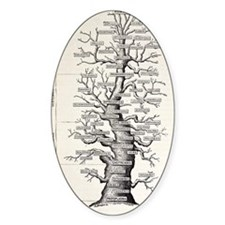 1886 French copy Haeckel 'tree of l Decal