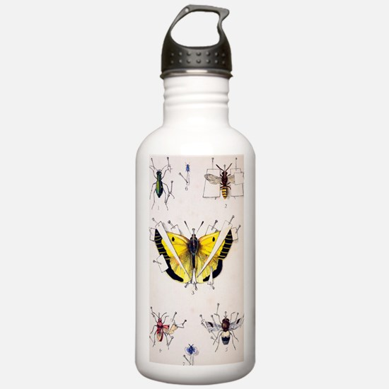 19th Century Insect se Sports Water Bottle