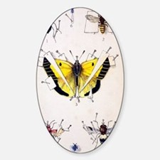 19th Century Insect setting board Sticker (Oval)