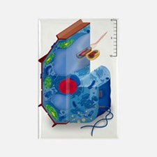 Cell types, artwork Rectangle Magnet