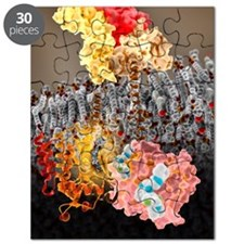 Growth hormone receptor, molecular model Puzzle