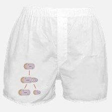 Bacterial replication, artwork Boxer Shorts