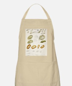 Protozoa, historical artwork Apron
